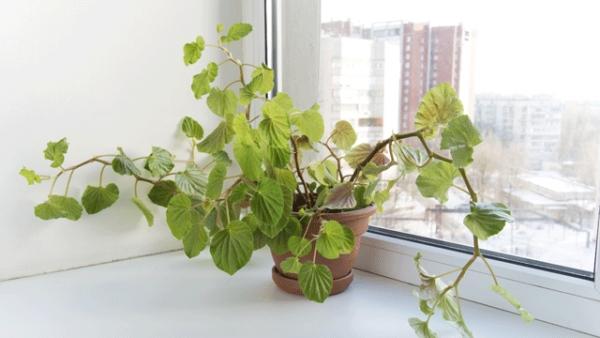pflegeleichte zimmerpflanzen diese pflanzen gehen nicht. Black Bedroom Furniture Sets. Home Design Ideas