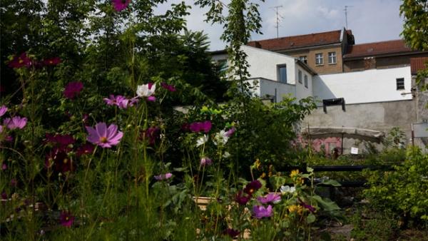 garten in der stadt urban gardening. Black Bedroom Furniture Sets. Home Design Ideas